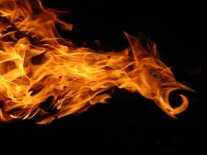 FireHawkdreamstime_m_3134182