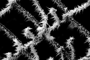 Ice-Crystals-on-a-Chain-Link-Fence__IMG_6560-580x386
