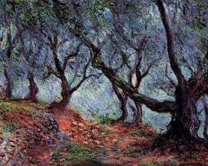 grove-of-olive-trees-in-bordighera