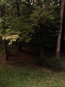 treesimg_0165