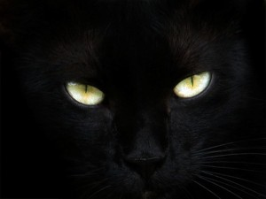 rblack_cat_eyes-17951